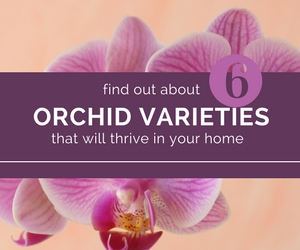I-believe-in-orchid-varieties-that-will-thrive-in-a-home-envirnment.jpg