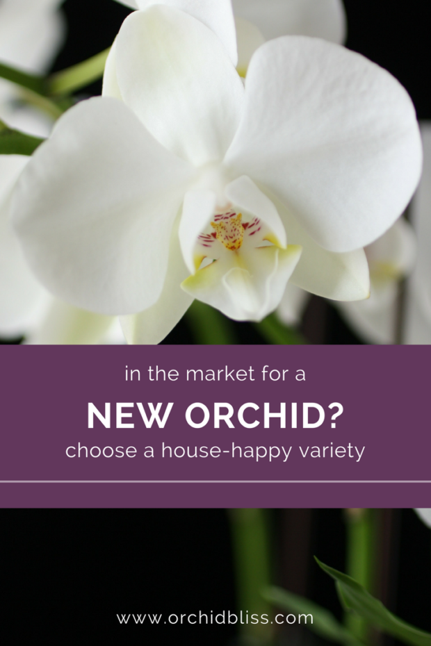 I-love-this-find-out-about-several-varieties-of-orchids-that-will-live-happily-in-your-house-that-dont-require-a-greenhouse.png
