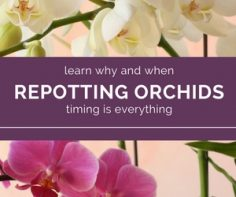 Find-out-if-now-is-the-time-to-re-pot-your-orchid.jpg