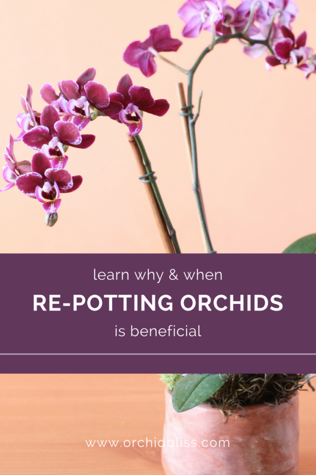 This-is-so-helpful-now-I-know-when-to-and-when-not-to-repot-my-orchids.png