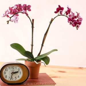 Why Re Pot Orchids Plus 4 Clues That Tell You When To Re Pot Orchids