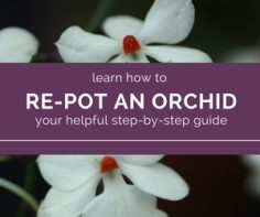 Follow-my-guide-for-successfully-re-potting-your-orchid.jpg