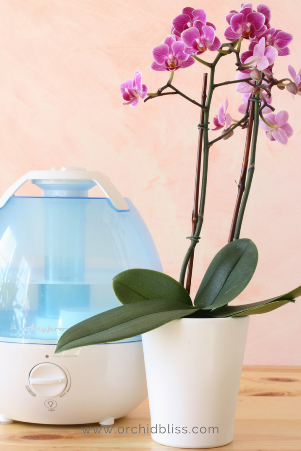 humidifer-for-orchids - orchids need humidity