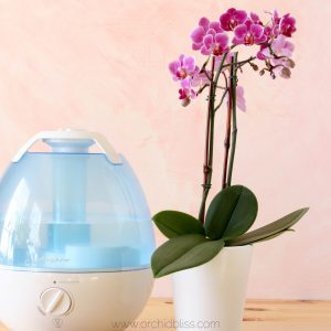 humidity for orchids