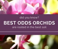 For-optimim-results-use-the-best-orchid-soil.jpg