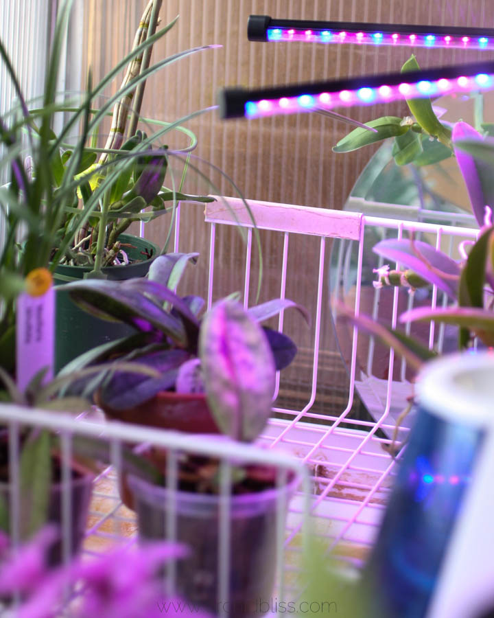 LED lights - grow orchids