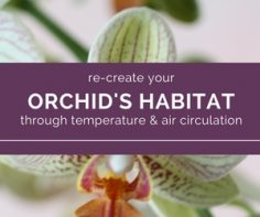 temperature and air circulation - orchids