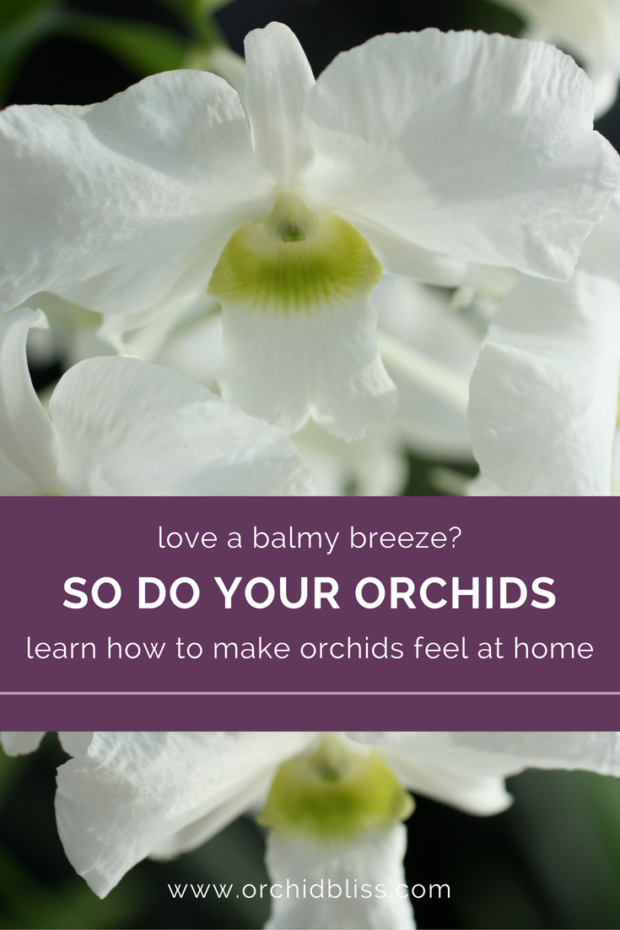 The-right-temperature-and-a-gentle-breeze-now-my-orchids-are-looking-better-than-ever - what temperature do orchids like - find out here
