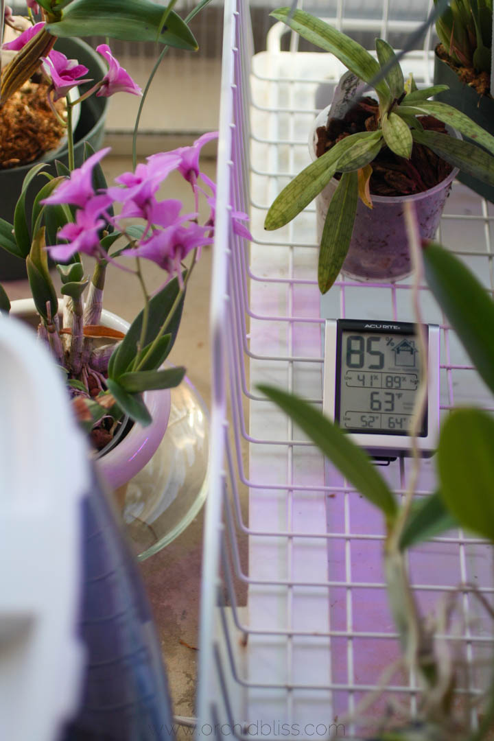Temperature And Air Circulation For Healthy Orchids Orchid Bliss