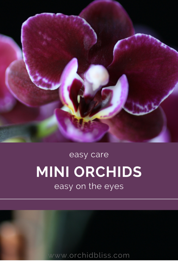 I-want-a-mini-orchid-for-every-room-in-the-house.png