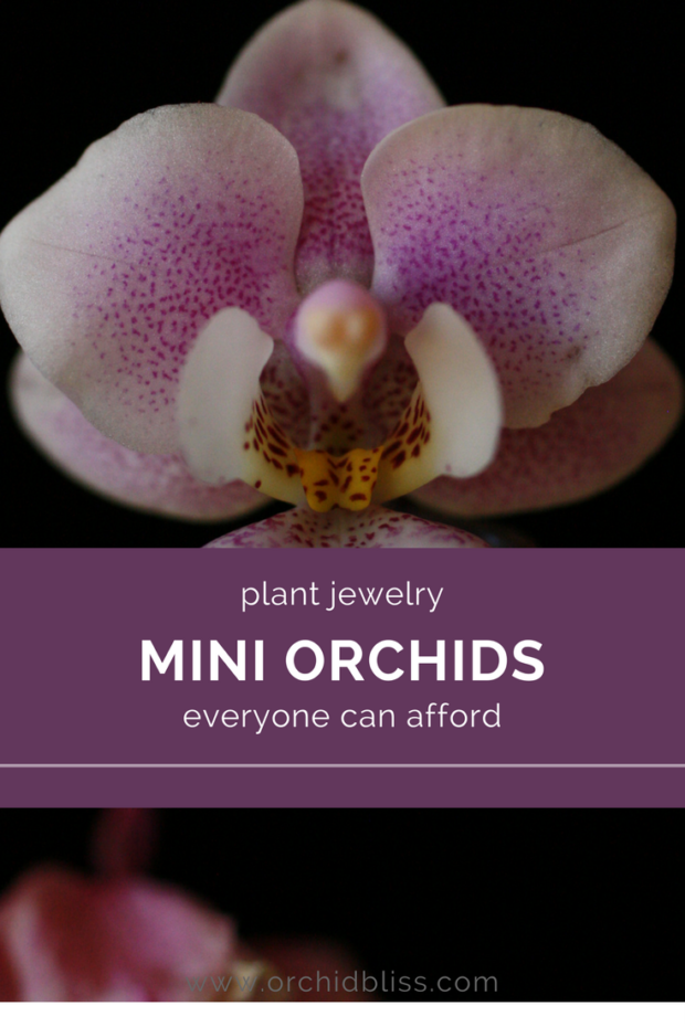 This-post-is-so-helpful-now-I-know-how-to-care-for-my-mini-orchid.png