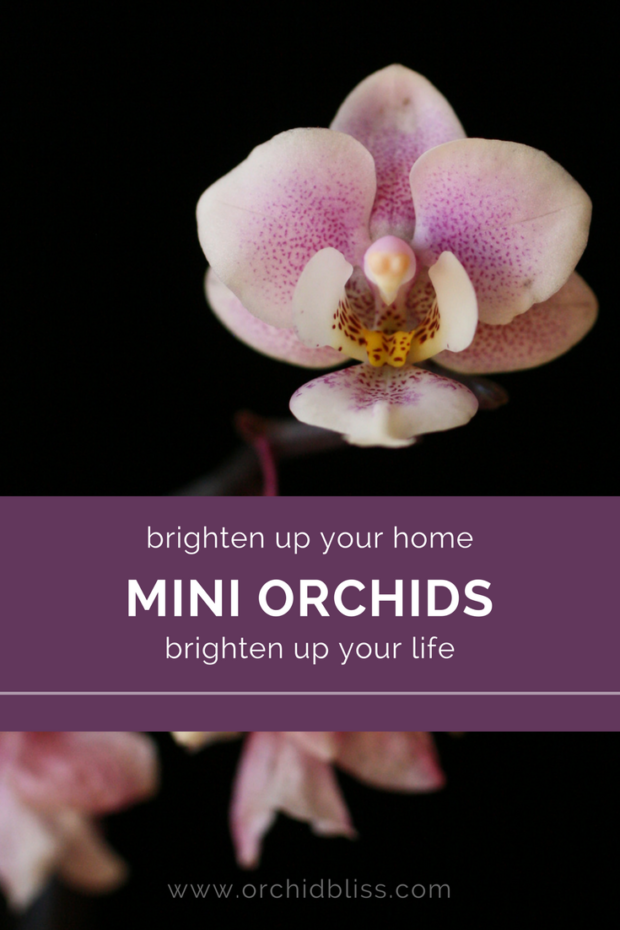 Wow-Read-this-post-to-learn-all-about-amazing-mini-orchids.png