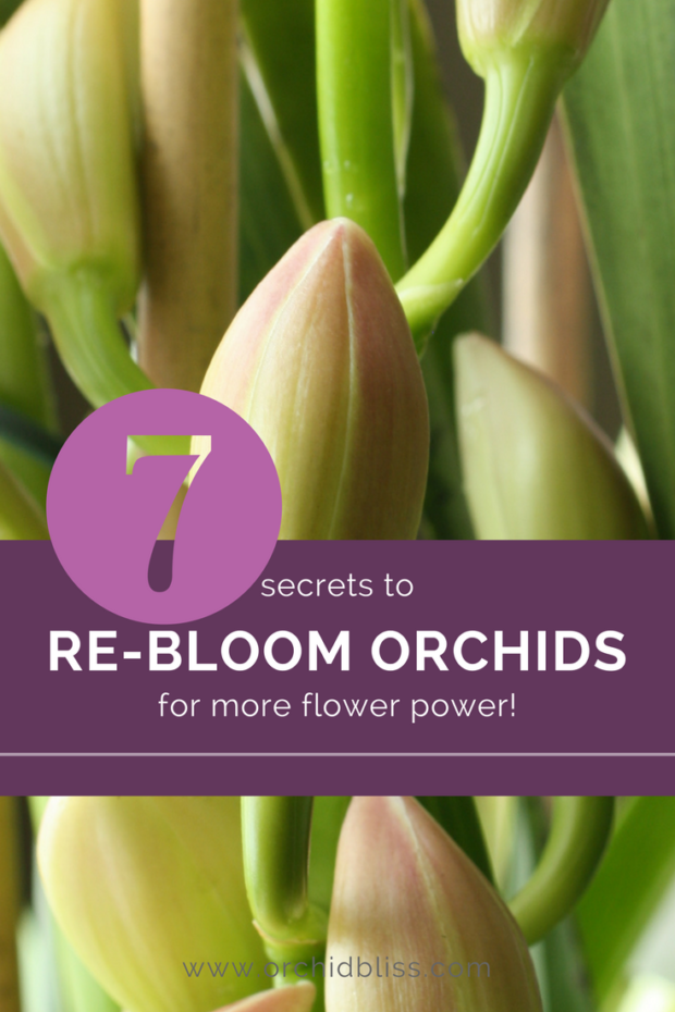 Perfect-for-anyone-who-wants-to-re-bloom-their-orchids.png