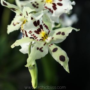 orchid fun facts