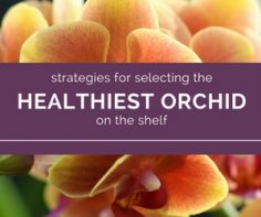 Be-a-Smart-ORCHID-Shopper-pick-the-best-one.jpg