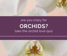 A-Match-Made-in-Heaven-You-and-Orchids.jpg
