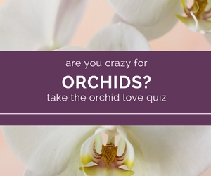 A Match Made in Heaven You and Orchids