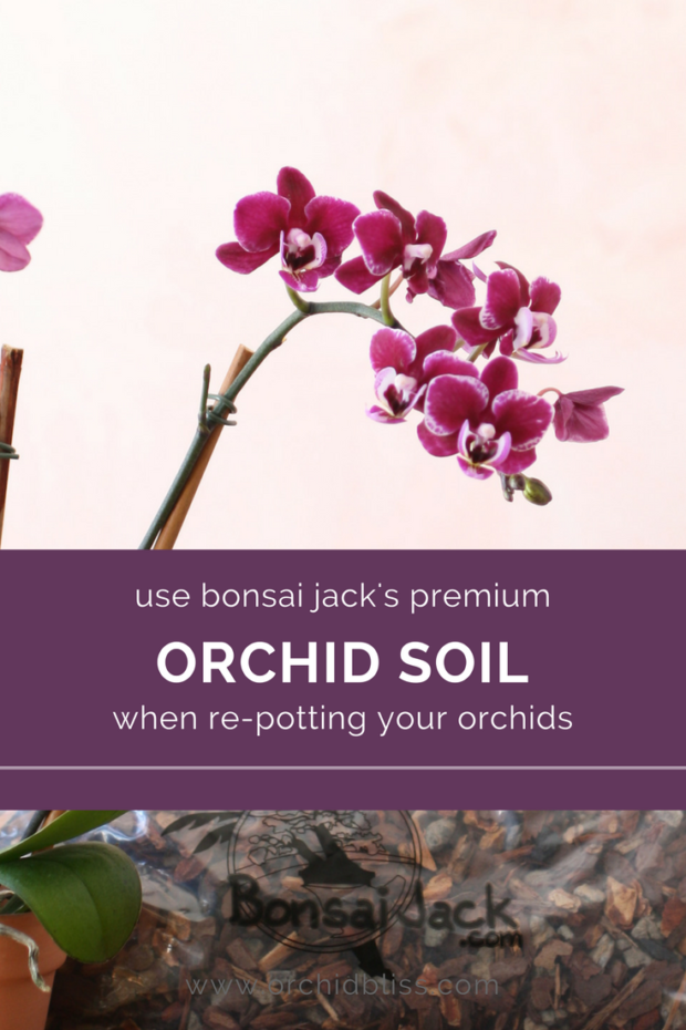 Bonsai-Jacks-orchid-soil-is-truly-amazing-1.png