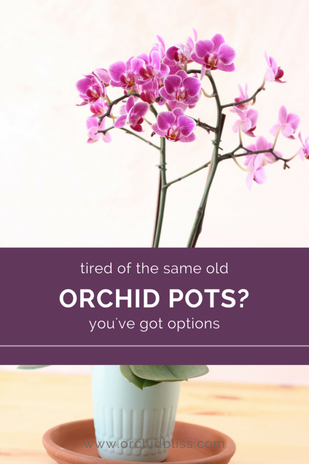 What-a-fun-article-detailing-orchid-pots.png