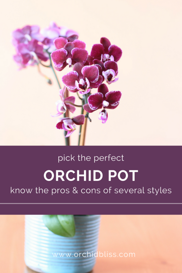 Wow-a-really-helpful-guide-on-orchid-pots.png
