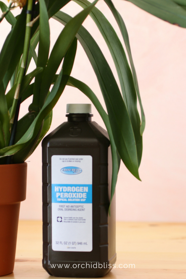 hydrogen-peroxide-to-treat-bacterial-infections-on-orchids - treat orchid pests and disease