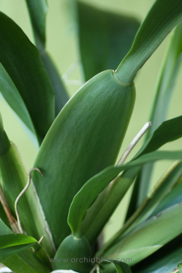 nitrogen-promotes-healthy-foliage-orchid-fertilizer.png