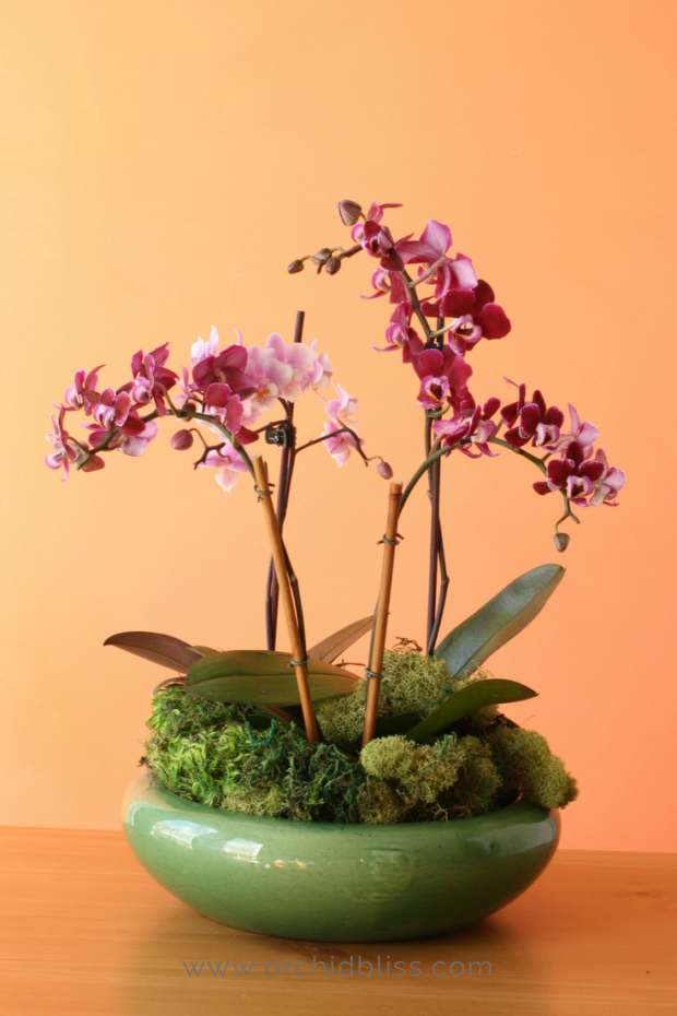orchid-display-orchid-planter-idea.png