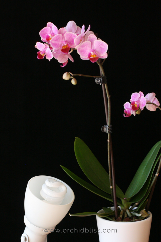 orchids-artificial-lighting - give your orchids the right light