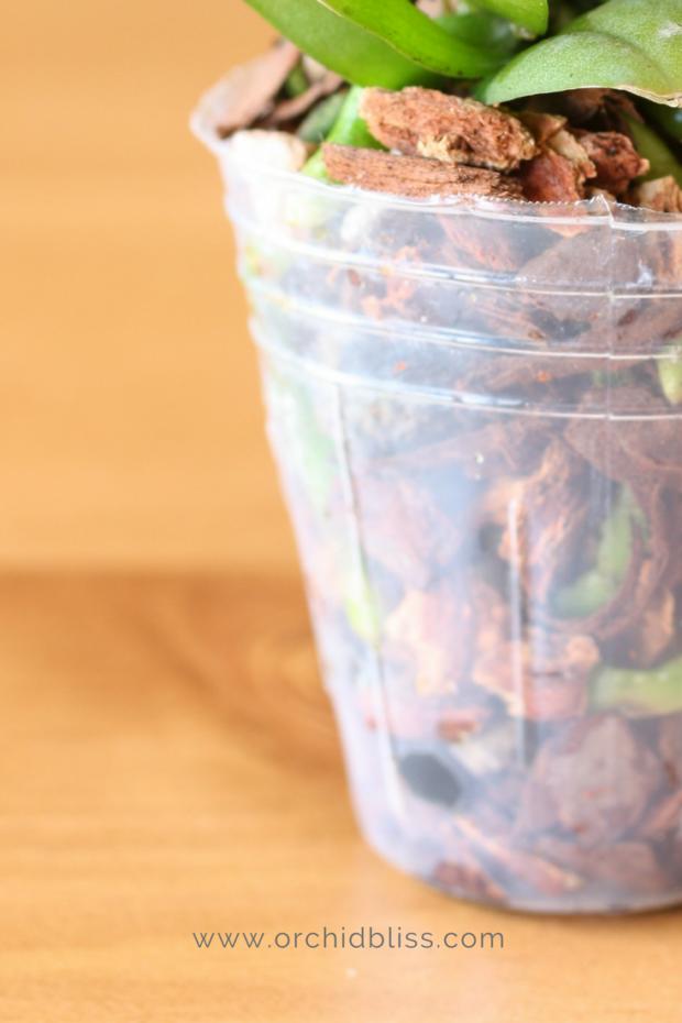 plastic-orchid-pots.png