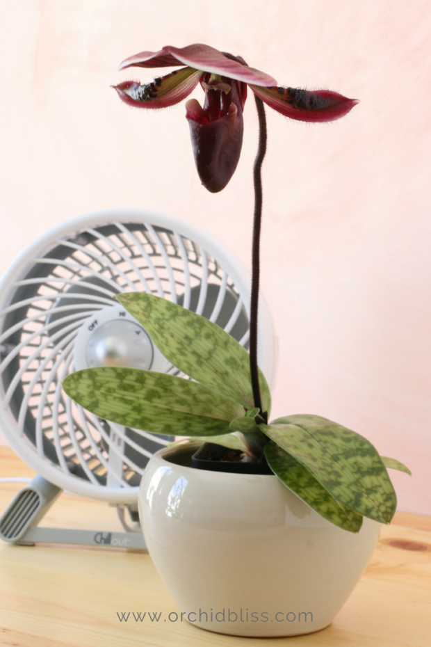 provide-orchids-with-air-circulation-using-a-fan.png