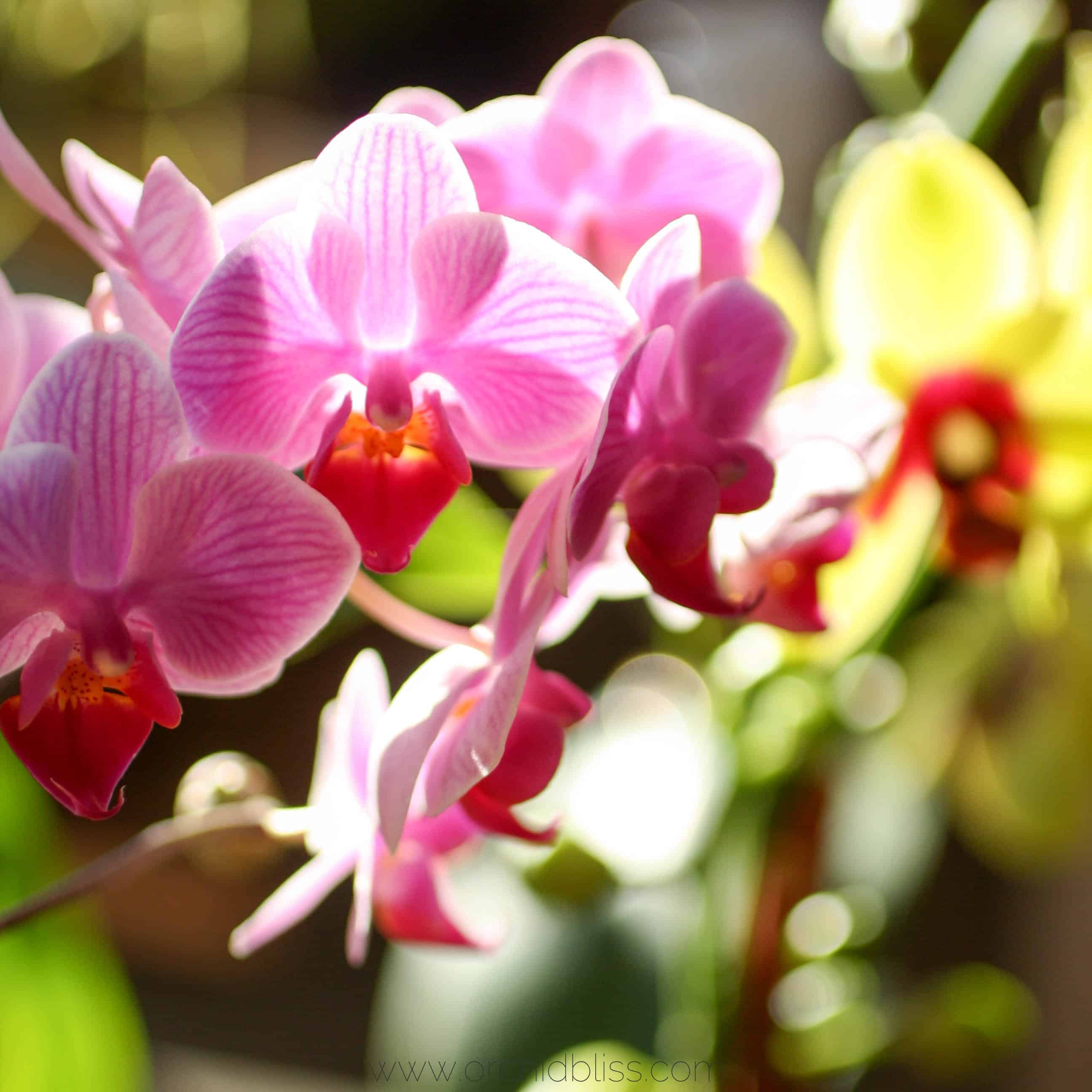 use best potting media - orchid soil