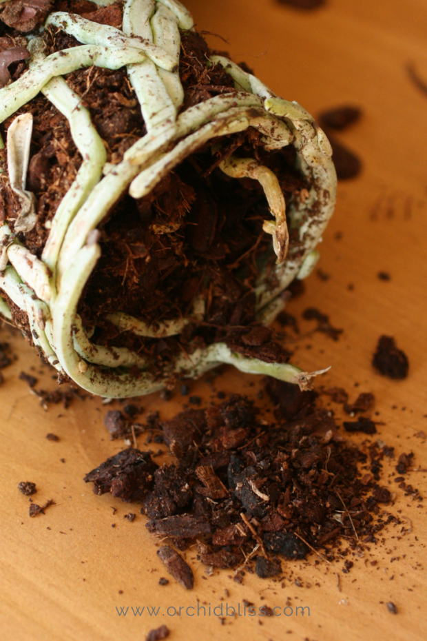 wood-chips-break-down-orchid-repot.png