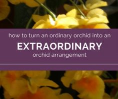 ust-for-you-tips-and-tricks-for-creating-orchid-arrangements.