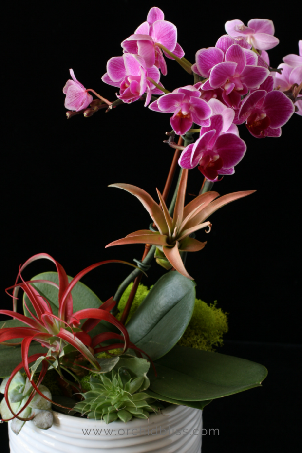 Just one orchid can create a very pretty orchid arrangement.png