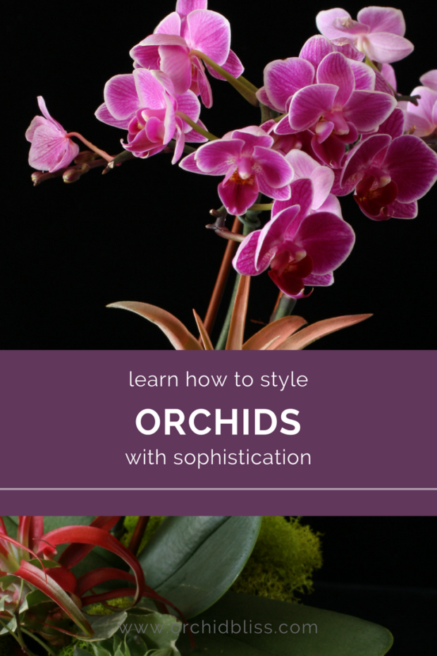 Love-this-post-on-stying-orchid-arrangments.png