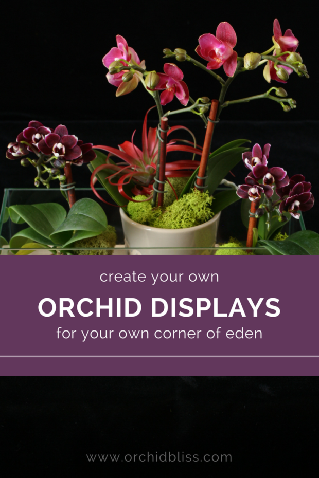 This-post-makes-creating-beautiful-orchid-arrangments-a-breeze.png