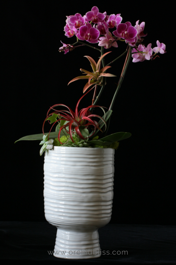 This-pot-is-beautiful-for-orchid-arrangments-Read-the-post-to-learn-more.png