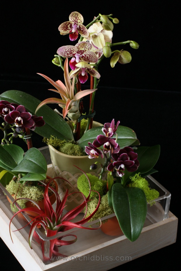 When-I-see-my-orchid-arrangments-I-smile.png