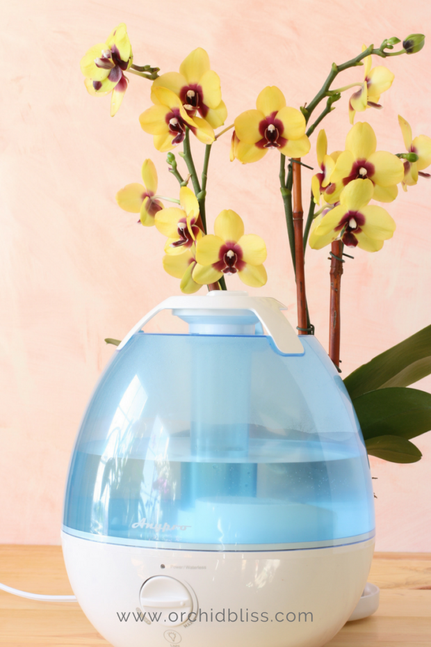 orchids thrive with high humidity - learn how to care for an orchid