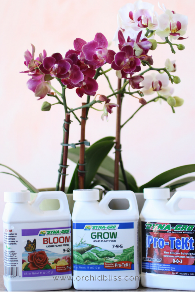 fertilizing orchids - caring for orchids indoors