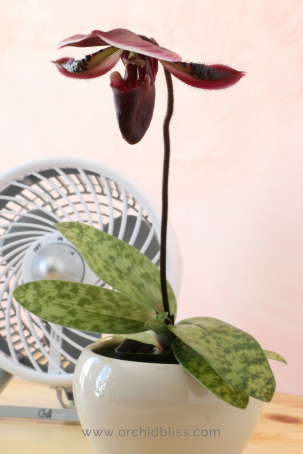 Proper-temperature-and-air-circulation-are-key-to-caring-for-orchids-in-the-home.png