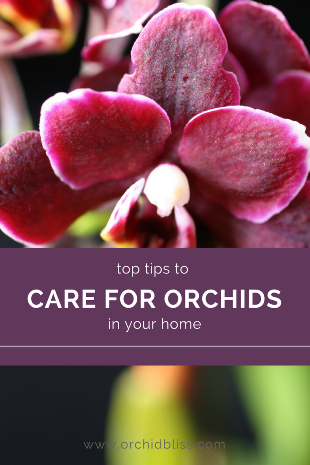 Discover: Caring for orchids at home