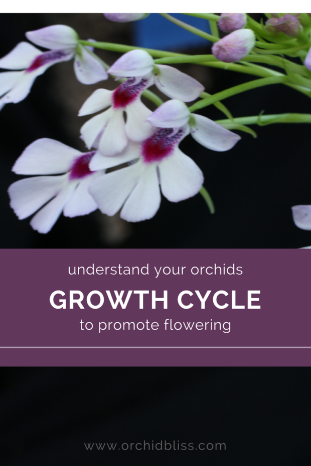 Fascinating learn about your orchids growth cycle