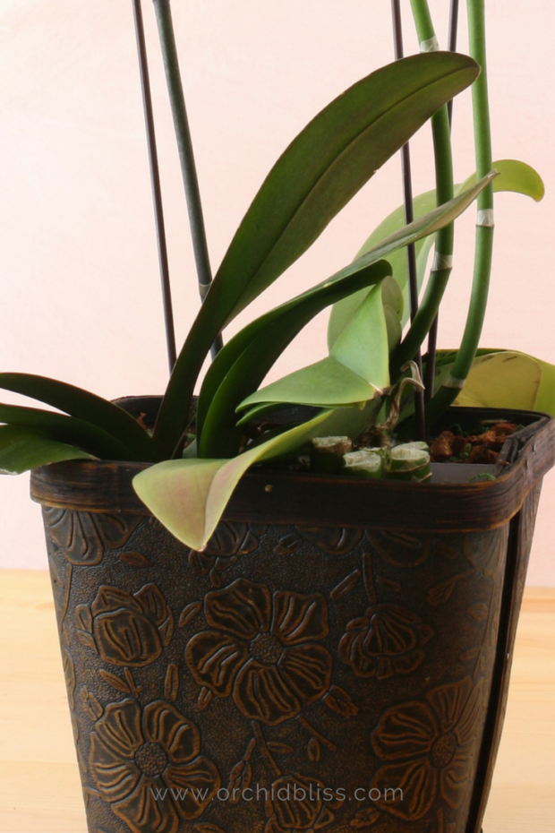 Orchid pot without drainage