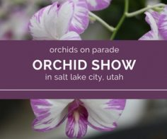 Salt Lake City Orchid Show 11-2017