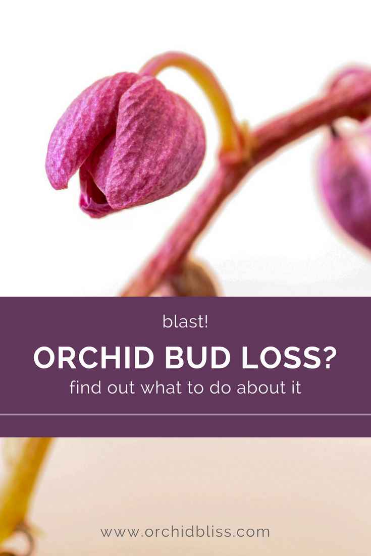 Find out what you can do to prevent your orchid bud from dying