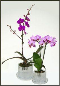 carousel orchid pot