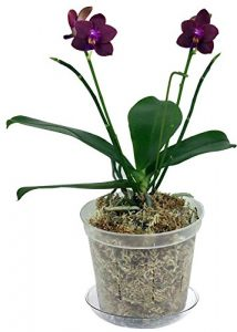 clear slotted orchid pot