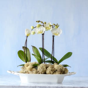 orchid centerpieces - white orchids