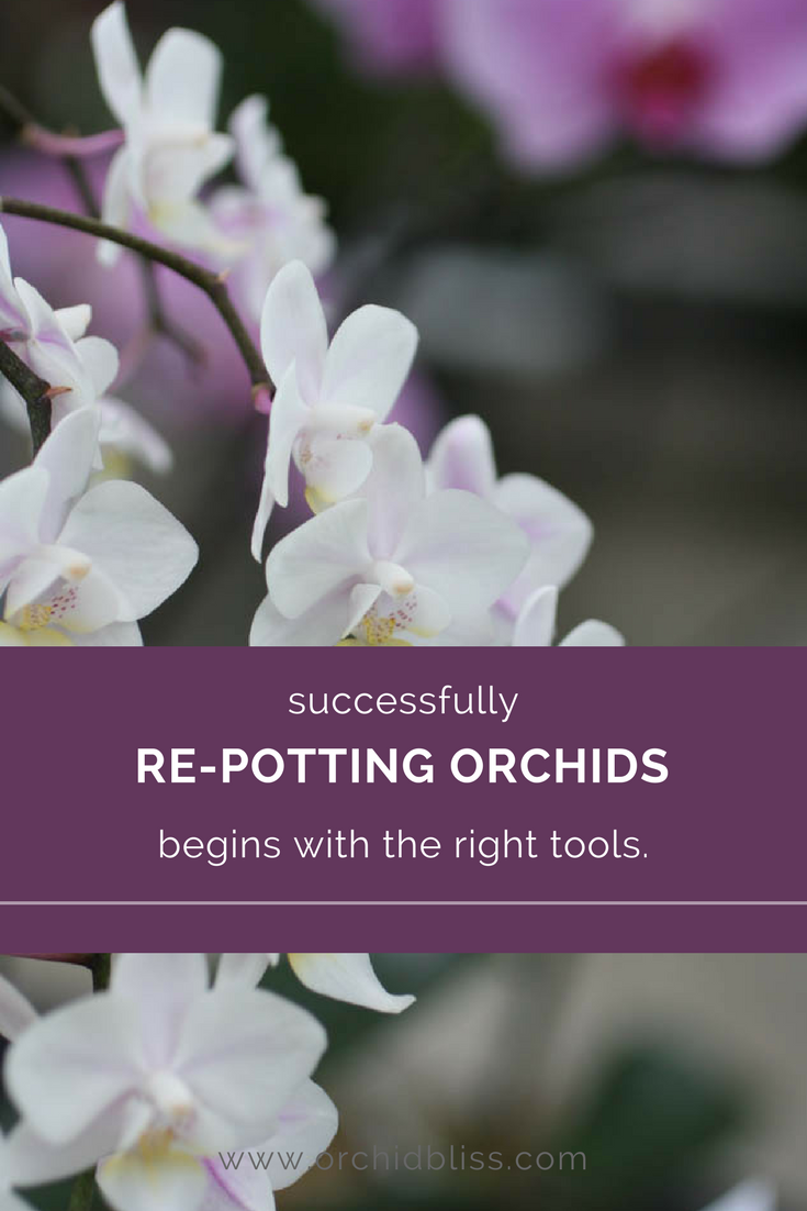 Find out which tools I use to successfully pot my orchids